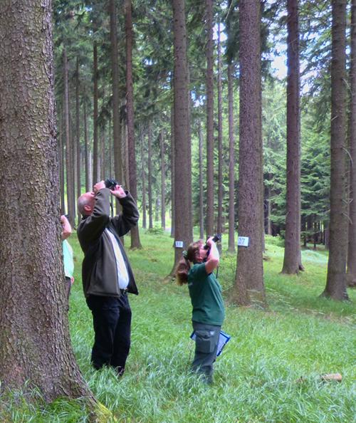 Waldzustandserhebung 2016 im sächsischen Wald gestartet