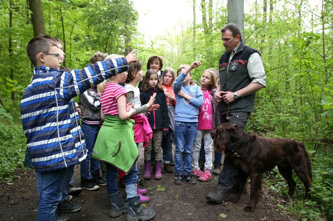 NRW: In den Sommerferien den Wald entdecken