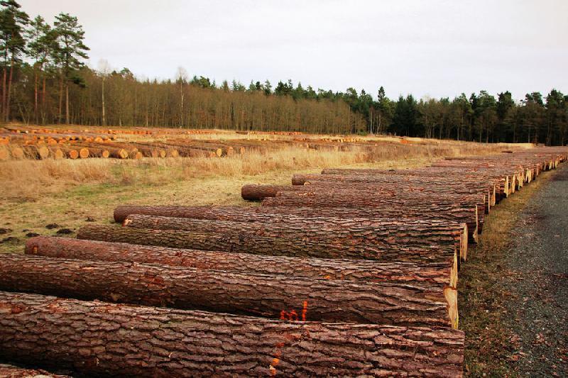 Norddeutsches Nadelwertholz sehr begehrt