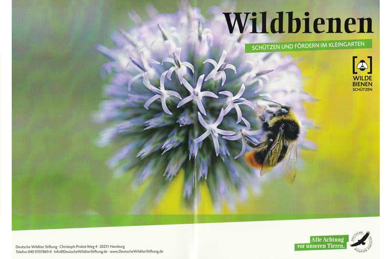 Richtig Gärtnern für Wildbienen