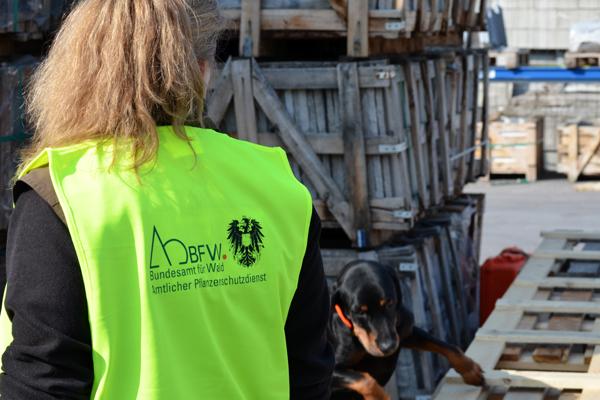 Hundenasen erfolgreich im Einsatz gegen Holzschädlinge
