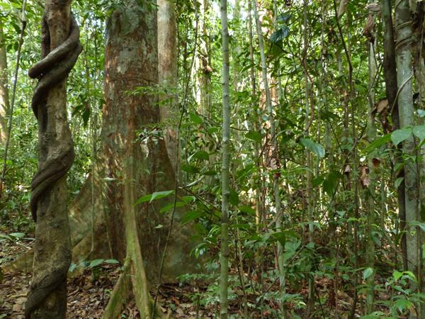 Umwandlung von Regenwald in Agrarflächen: Weniger Artenvielfalt, höheres Einkommen